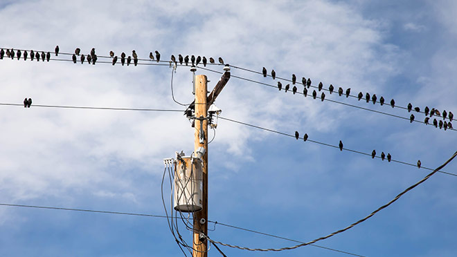 9 Things You Might Not Know About Power Lines
