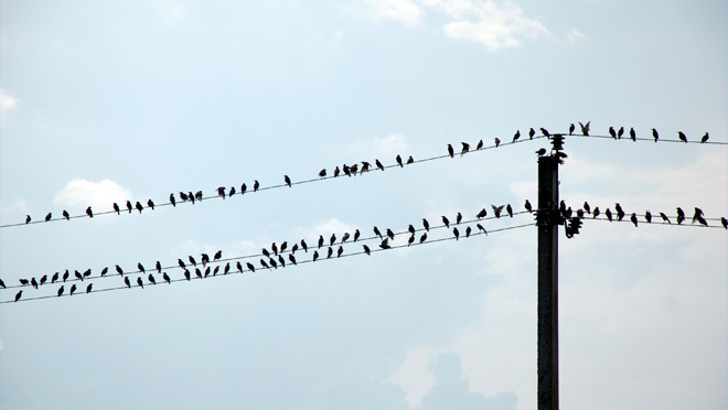 Image of birds on power lines