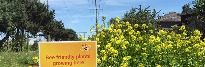 Pollination corridor under power lines in Richmond, B.C.