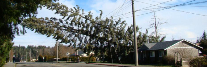 Removing Trees Near Power Lines
