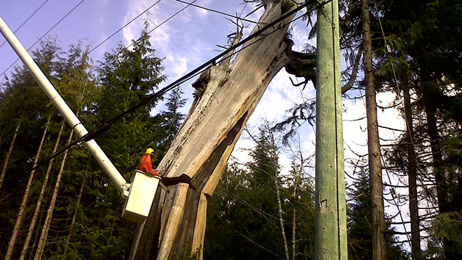Image of worker in aerial bucket removing hazard tree next to BC Hydro line