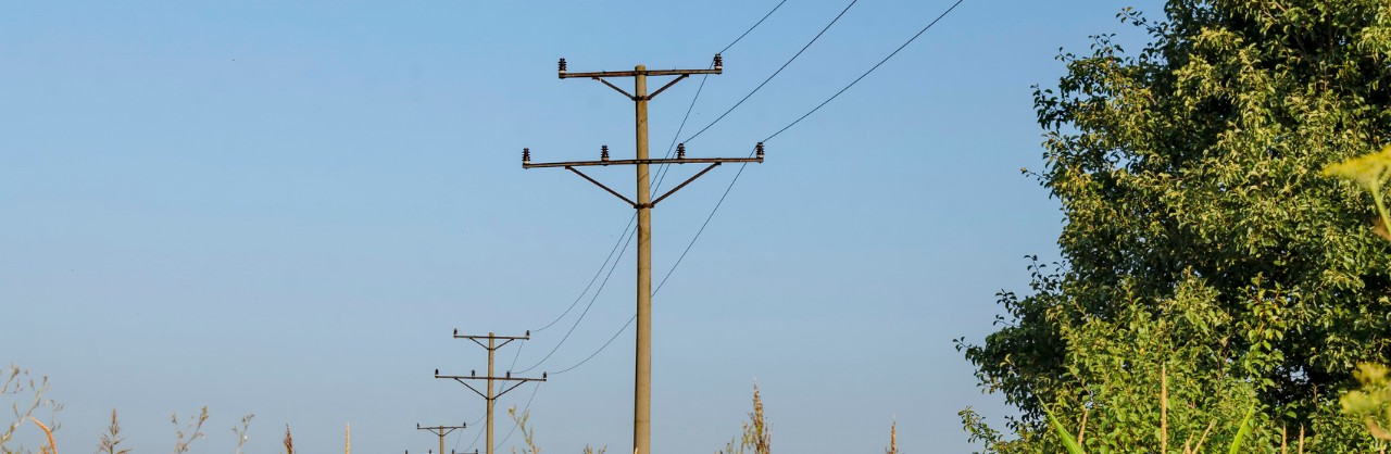 Planting Trees Around Power Lines : Trees and power lines