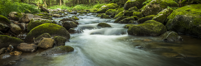 white-water-river-rocks-forest-660x216.jpg