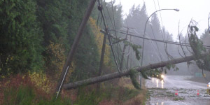 Downed powerlines from a fallen tree during a storm