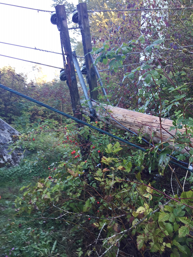 Vandalized power pole cut down in Port Coquitlam