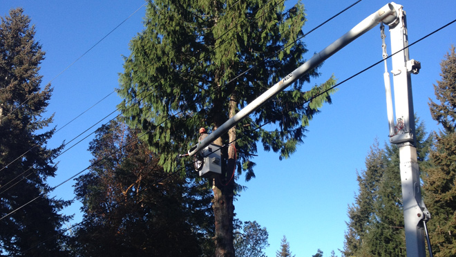 Planting Trees Around Power Lines : We work with arborists to prune trees near power lines the pruning