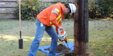BC Hydro employee mintaining wood poles