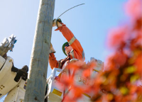 A BC Hydro Power Line technician working on a power line