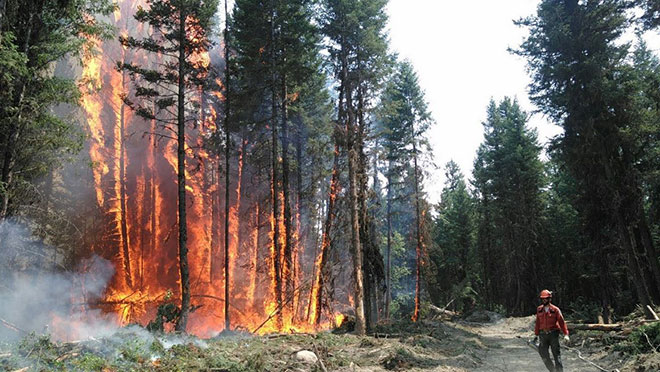 Firefighter next to a burning stand of trees