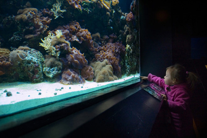 Child looking at aquarium fish tank full width