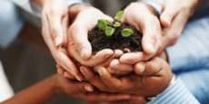 A group of hands holding a plant growing in a pile of soil