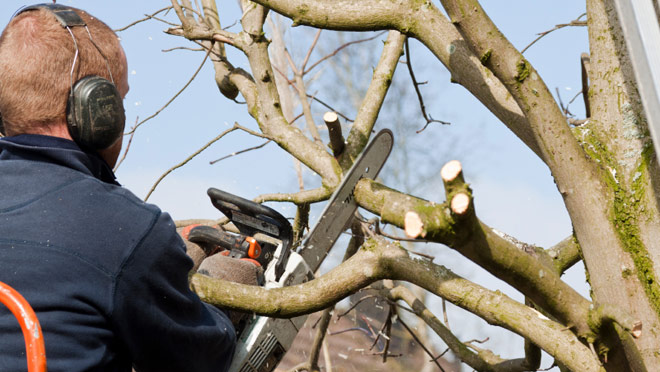 Stay Safe When Pruning Your Trees