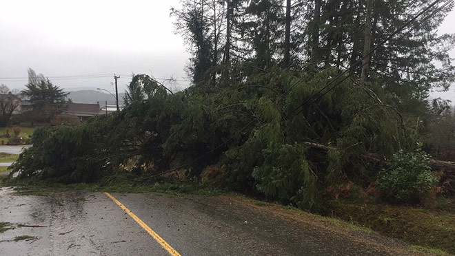 Large tree fallen on a power line and a road after a storm