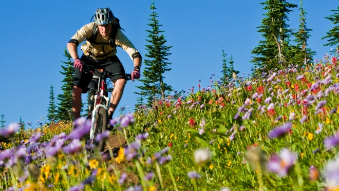 Mountain biker rides trail through field of wildflowers at Keystone near Revelstoke
