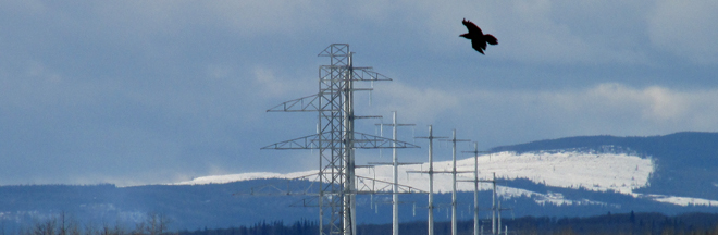 dcat-transmission-poles-winter-eagle-660x216.jpg