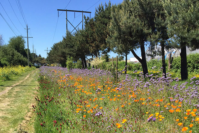 Image of flowers and powerlines in Richmond's pollination corridor