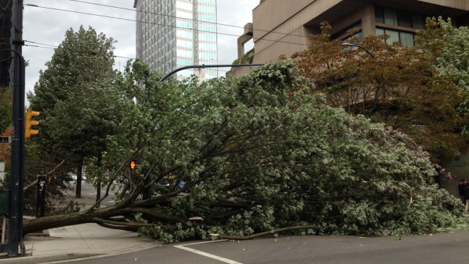 Uprooted tree blocks traffic at Nelson and Howe streets in Vancouver during August 29, 2015 windstorm.