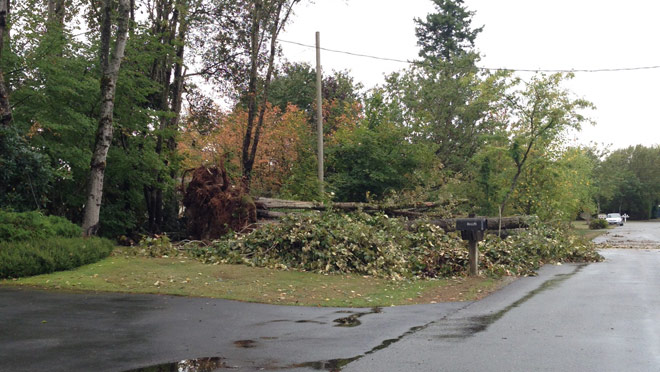 Image of fallen trees affecting electric lines