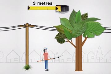 Trim those trees, safely