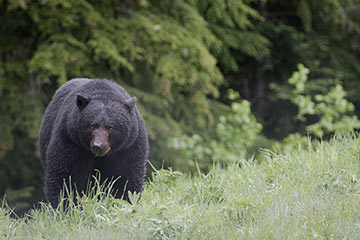 How you can steer clear of bears, cougars, wasps and ticks