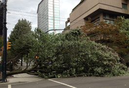 Lessons from a windstorm