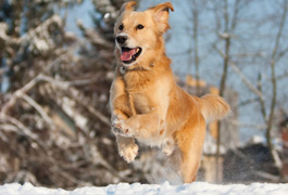 Winter safety tips: driving, pets, and heating