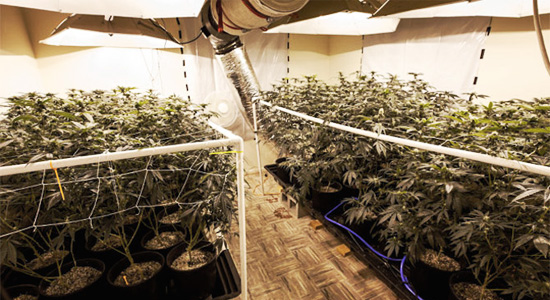 How BC Hydro fought marijuana grow-ops stealing electricity