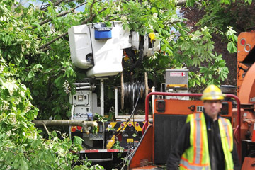 Worker uninjured after tree falls on his truck